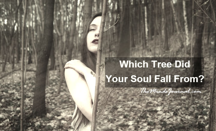 Which Tree Did Your Soul Fall From? Find out, what does your birth date say