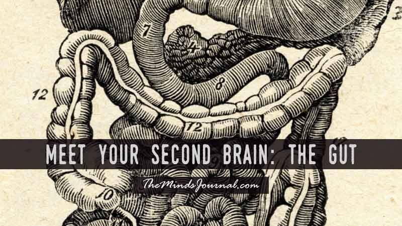 Meet Your Second Brain: The Gut