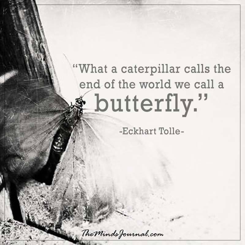 What a caterpiller calls the end of the world we call a butterfly