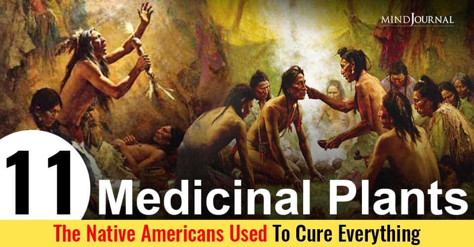 Medicinal Plants The Native Americans Used As Herbal Remedies