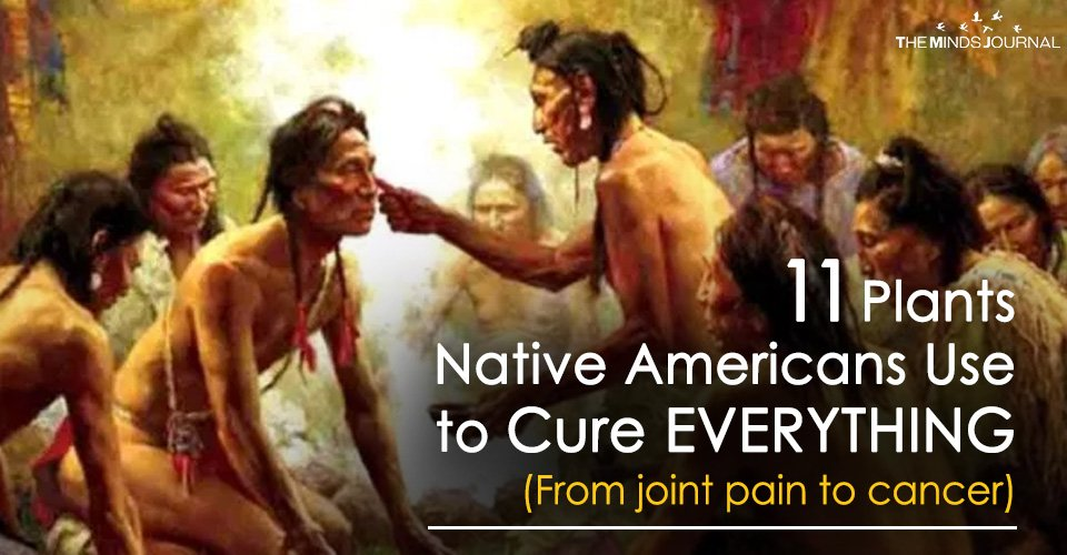 11 Plants Native Americans Use to Cure EVERYTHING (From joint pain to cancer)