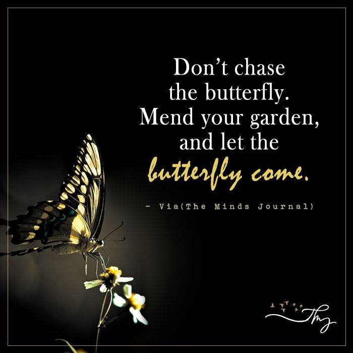 Don't chase the butterfly