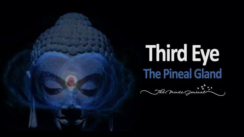The Third Eye, The Pineal Gland – This Is A MUST Read!