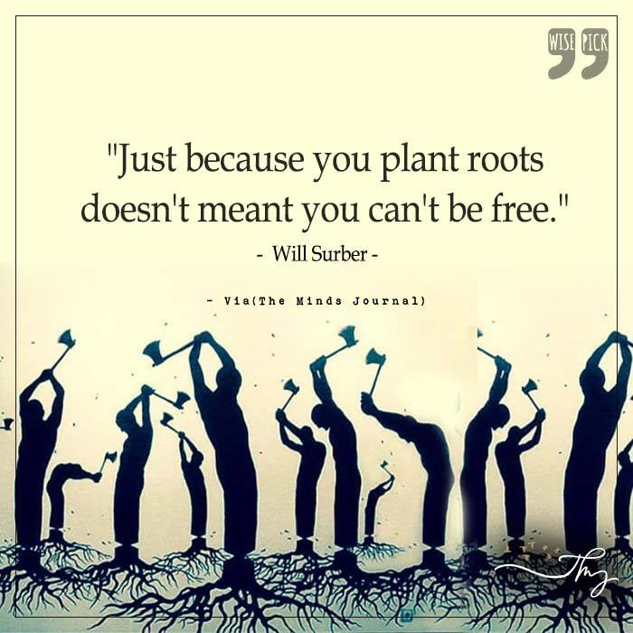 Just because you plant roots