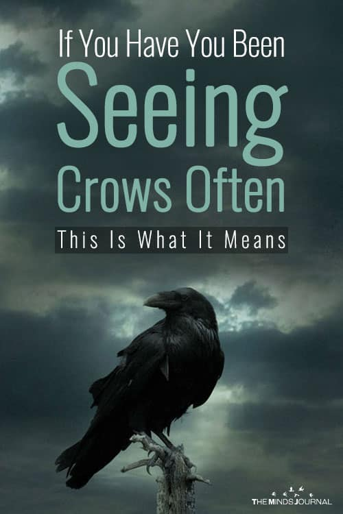 If You Have You Been Seeing Crows Often, This Is What It Means