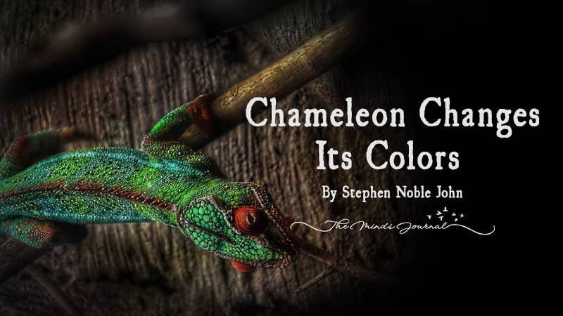 Chameleon Changes Its Colors