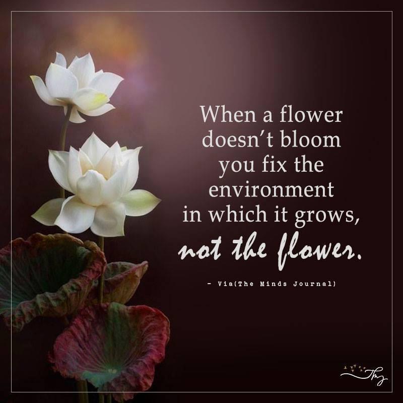 When a flower doesn't bloom