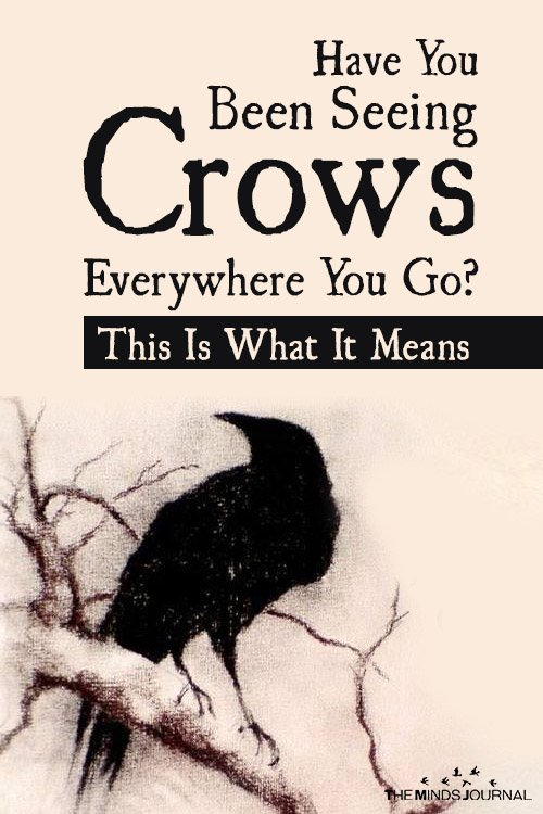 Have You Been Seeing Crows Everywhere You Go This Is What It Means!