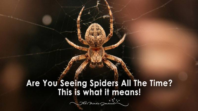 Are You Seeing Spiders All The Time This Is What It Could Signify