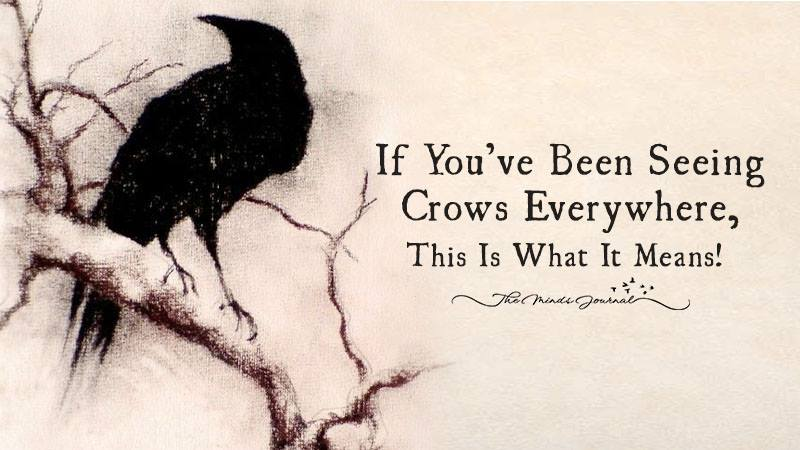 Have You Been Seeing Crows Everywhere You Go? This Is What It Means!