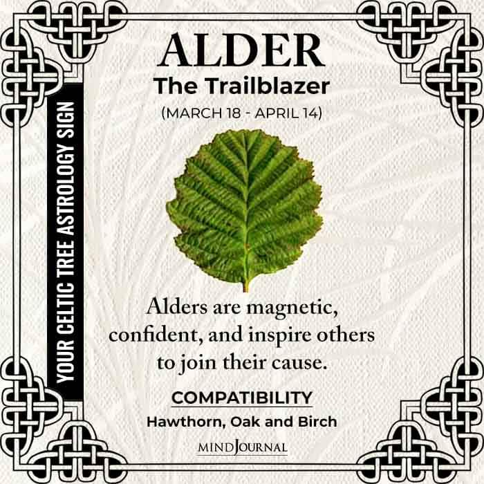 Alder The Trailblazer