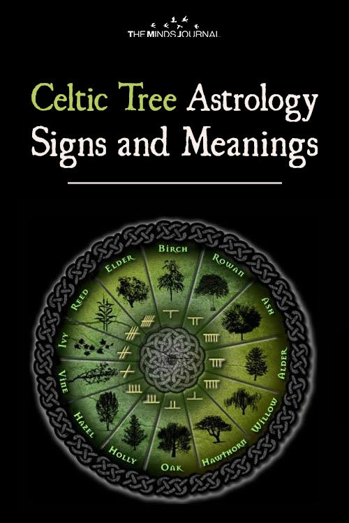 Celtic Tree Astrology Signs and Meanings