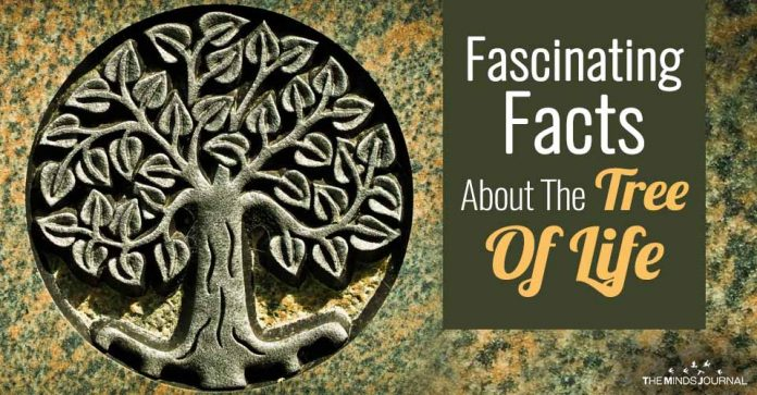 Fascinating Facts About The Tree Of Life