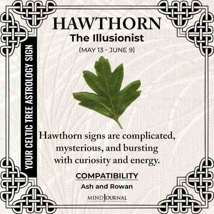 Hawthorn The Illusionist