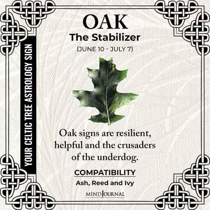 Oak The Stabilizer