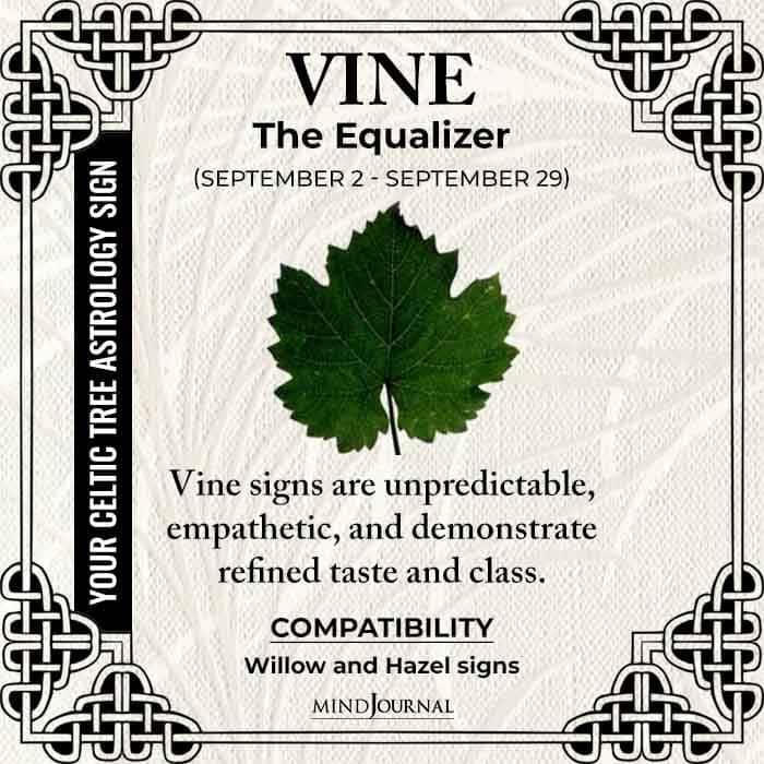 Vine The Equalizer