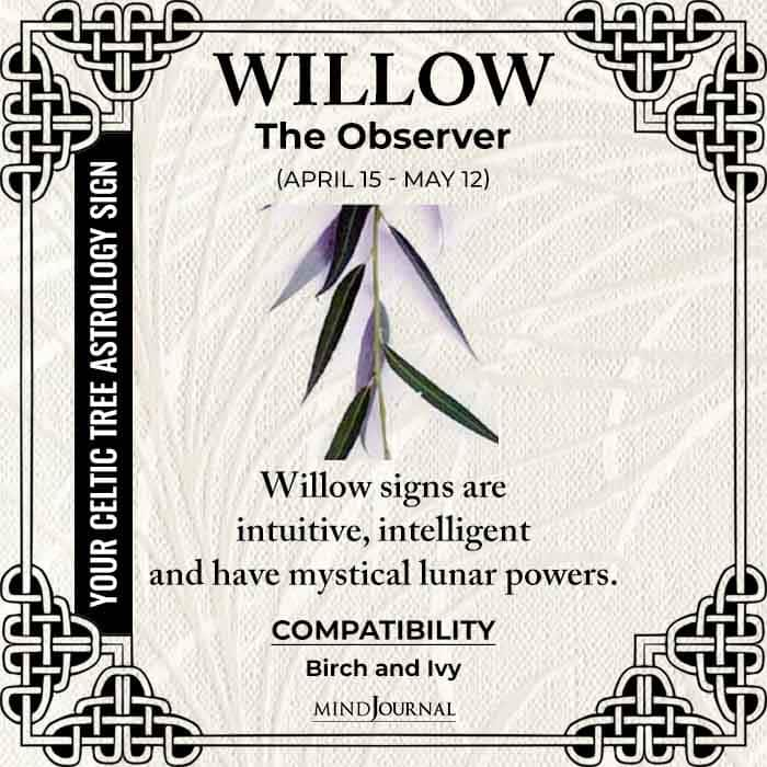 Willow The Observer