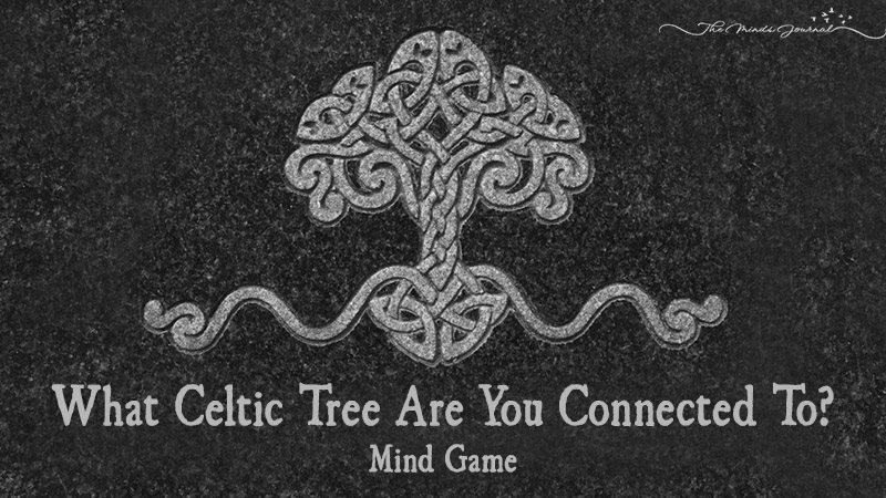 What Celtic Tree Are You Connected To?