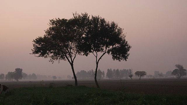 rukhala-trees-jpg-662x0_q70_crop-scale