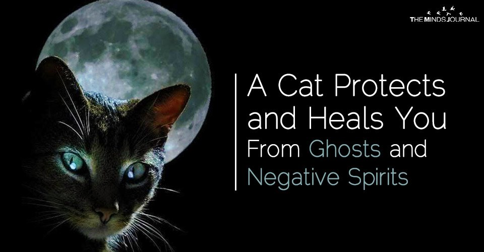 Cat –The Magical Animal That Protects You and Your House
