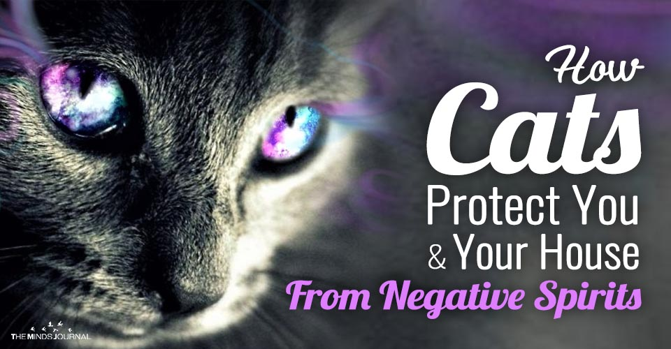 How Cats Protect You and Your House From Negative Spirits