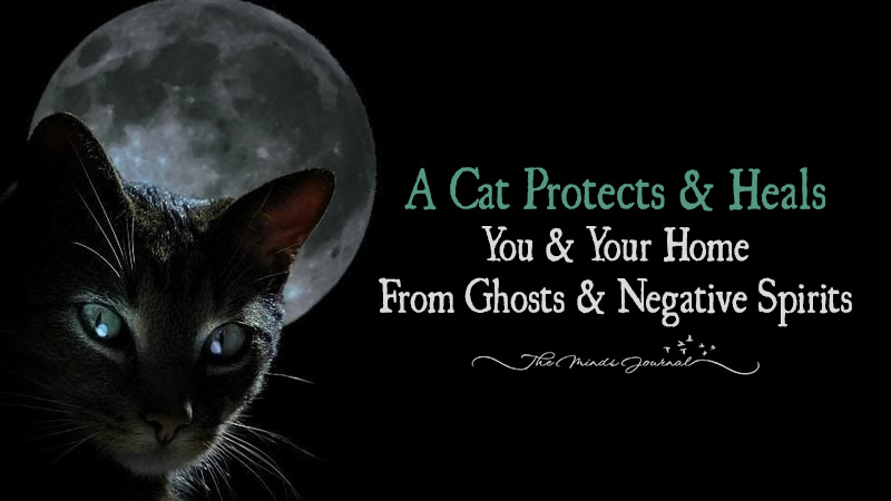 Cat –The Magical Animal That Protects You and Your House From Negative Energies