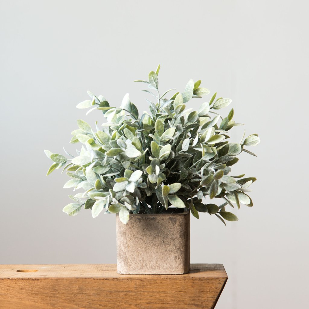 12 Plants Capable Of Creating Positive Energy In Your Home