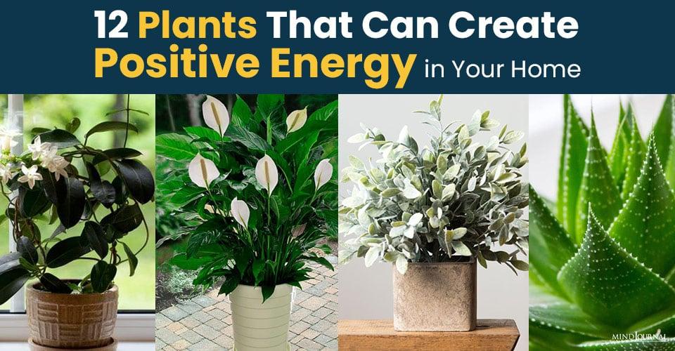 Plants Create Positive Energy Home