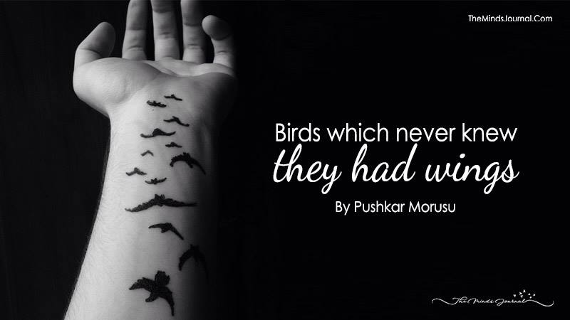 Birds Which Never Knew They Had Wings