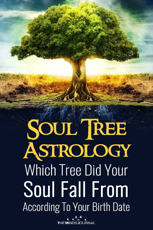 Soul Tree Astrology: Which Tree Did Your Soul Fall From According To Your Birth Date