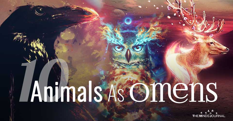 10 Animals As Omens When They Cross Your Path