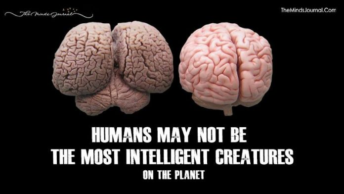 Humans May Not Be the Most Intelligent Creatures on the Planet