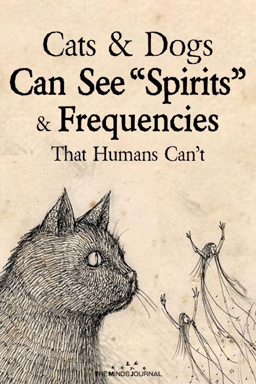 "Science Confirms That Cats and Dogs Can See ""Spirits"" and Frequencies That Humans Can't"