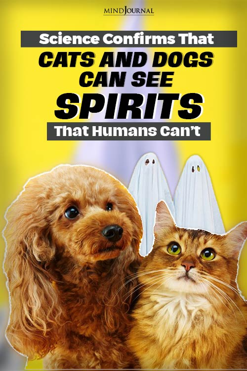 cats and dogs can see pinop