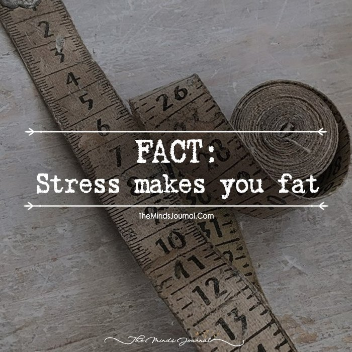 Stress makes you fat