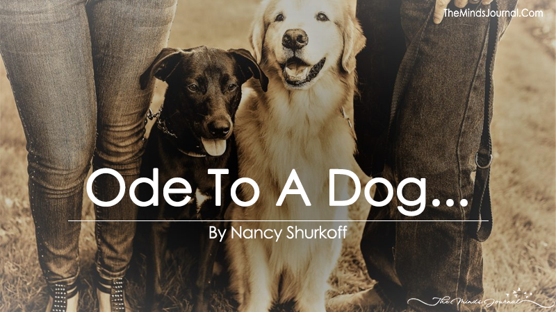 Ode To A Dog…