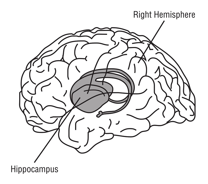 hippocampus-148151_960_720