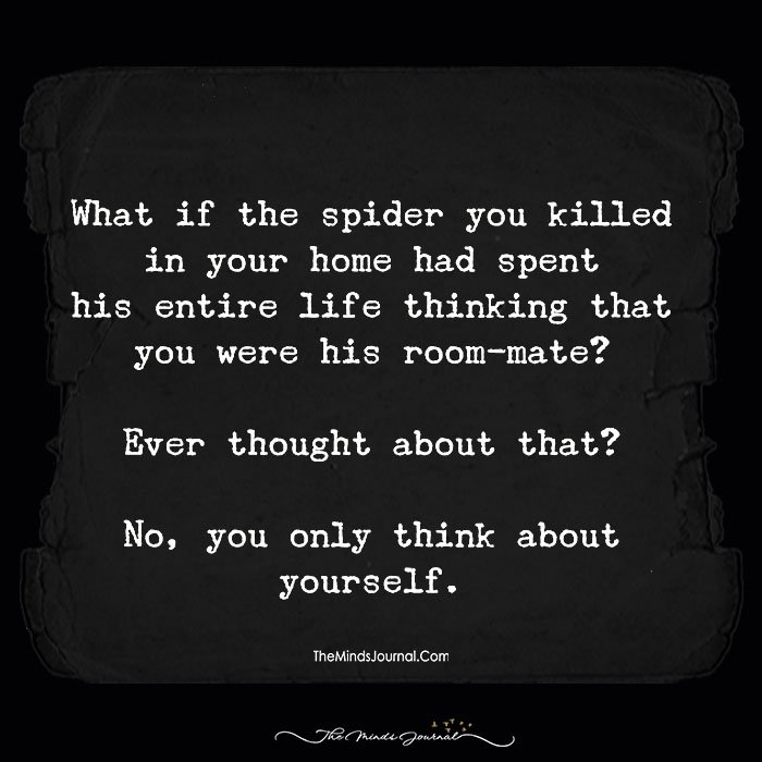 What If The Spider You Killed In Your Home Had Spent His Entire Life …