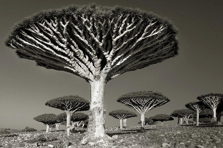 A Woman Spent 14 Years Photographing Our Planet's Oldest Trees, and Here Are The Results