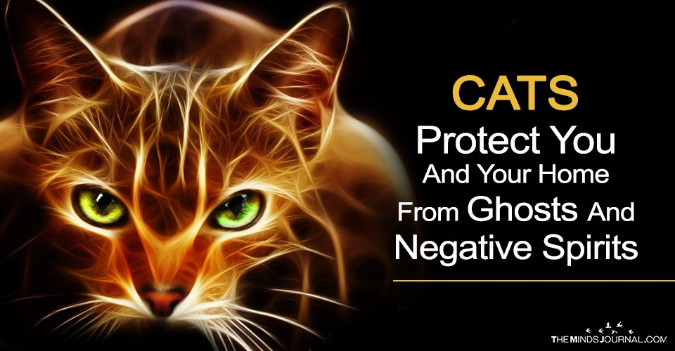 CATS Protect You And Your Home From Ghosts And Negative Spirits