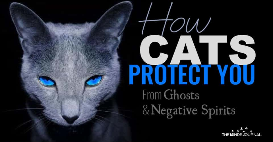 How CATS Protect You From Ghosts And Negative Spirits