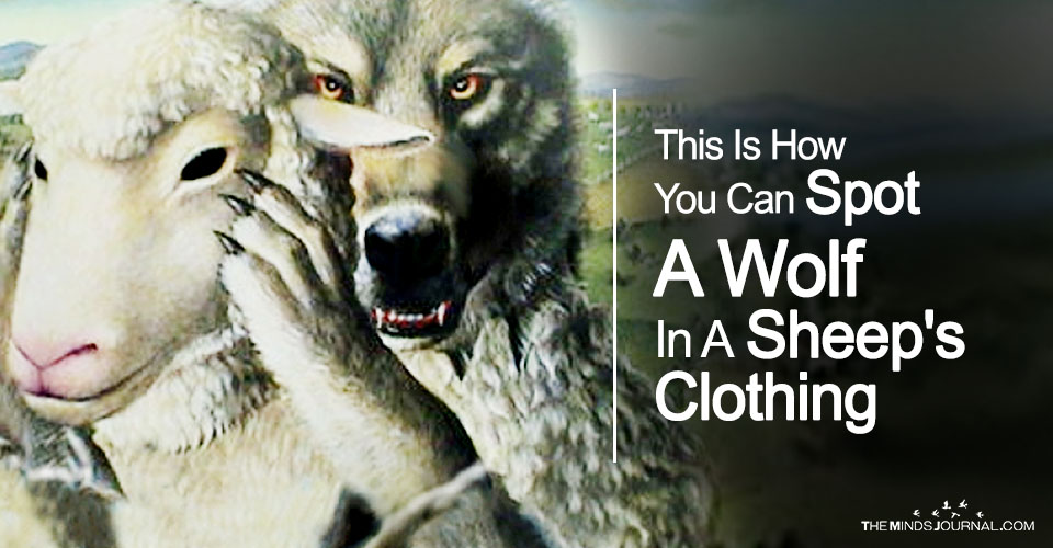 This Is How You Can Spot A Wolf In A Sheep's Clothing