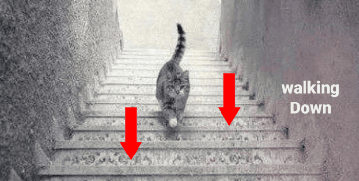 You are looking at the cat from top of the stairs and it's coming up