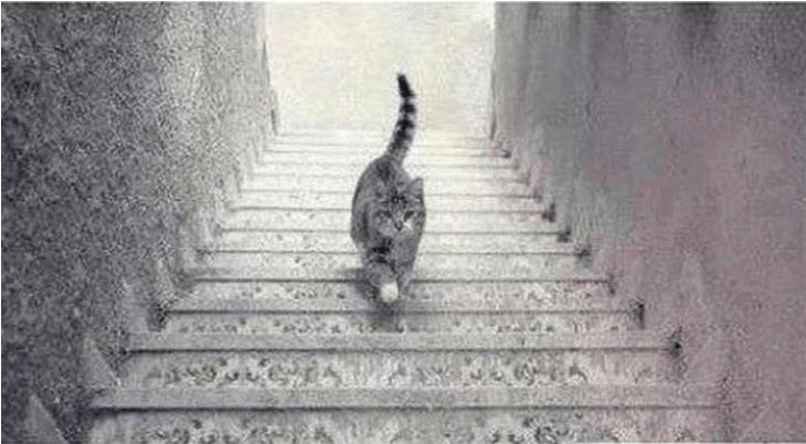 Optical Illusion Optimist Or Pessimist