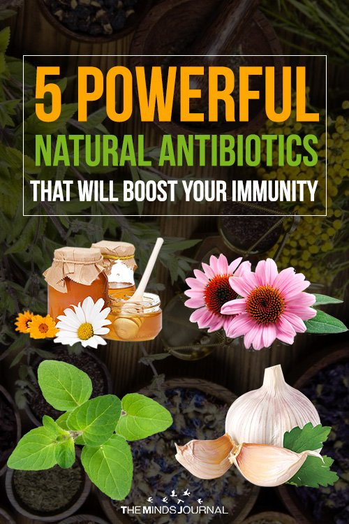 5 Powerful Natural Antibiotics That Will Boost Your Immunity