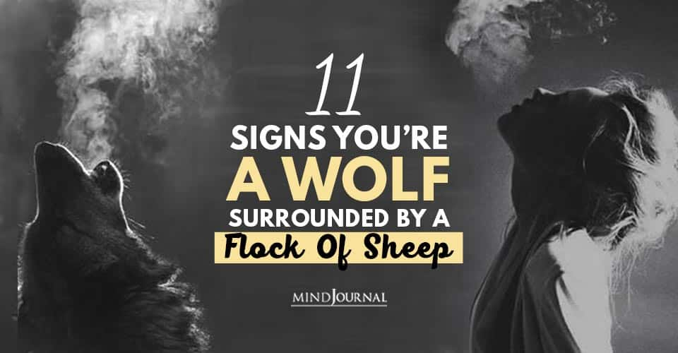 Signs You're Wolf Surrounded By Flock Of Sheep