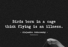 Birds Born In A Cage