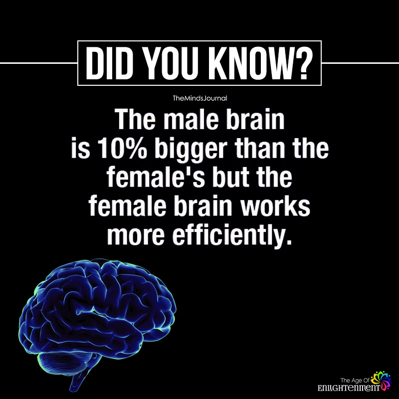 Science Facts Brain: The Male Brain Is 10% Bigger Than The Female's