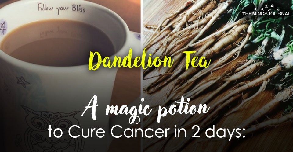 A Magic Potion to Cure Cancer in 2 days: Dandelion Tea