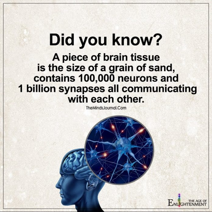 A piece Of Brain Tissue Is The Size Of A Grain of Sand